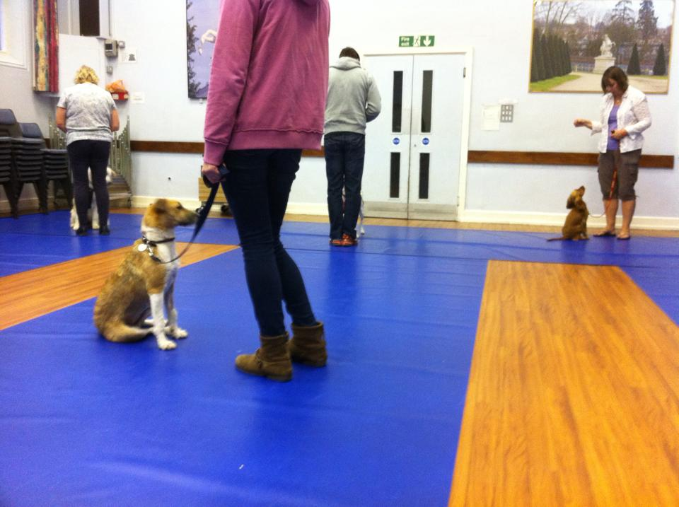 Four Counties Dog Rescue